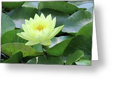Water Lily - Burnin' Love 14 Greeting Card