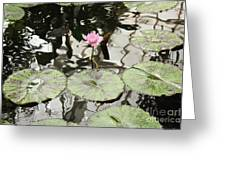 Water Lily Canvas Greeting Card