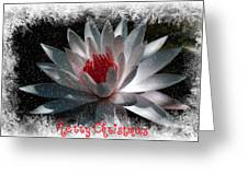 Water Lily Christmas Greeting Card