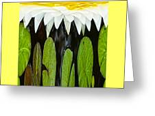 Water Lily  Greeting Card