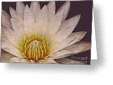 Water Lily Digital Painting Greeting Card