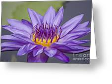 Water Lily Director George T Moore Greeting Card