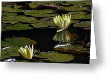 Water Lily Greeting Card by Fabio Giannini