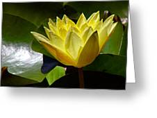 Water Lily Fc  Greeting Card