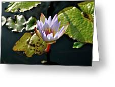 Water Lily For You Greeting Card