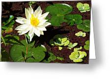 Water Lily From Private Garden Greeting Card