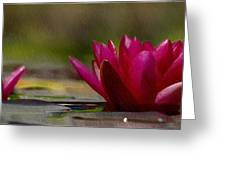 Water Lily - Id 16235-220248-4550 Greeting Card