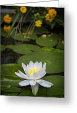Water Lily IIi Greeting Card