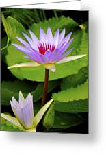 Water Lily In A Tropical Garden_4657 Greeting Card