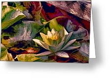 Water Lily In Living Color Greeting Card