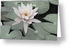 Water Lily In Soft Pink Greeting Card