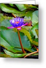 Water Lily In Tahiti Greeting Card