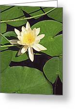 Water Lily I V Greeting Card