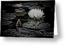 Water Lily Iv Greeting Card