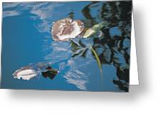 Water Lily Leaves And Reflection Of Clouds In Unknown Lake Greeting Card