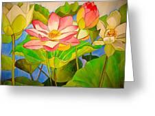 Water Lily Lotus Greeting Card