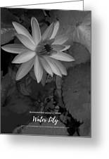 Water Lily Monochrome Greeting Card