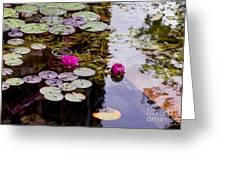 Water Lily Near Rijksmuseum Museum Greeting Card
