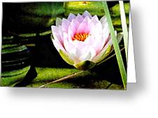 Water Lily No. 2 Greeting Card