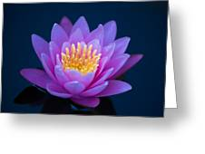 Water Lily Of The Dawn Greeting Card