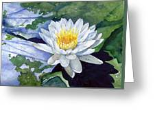 Water Lily Greeting Card by Sam Sidders