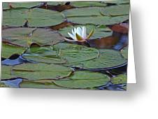 Water Lily Scene Greeting Card