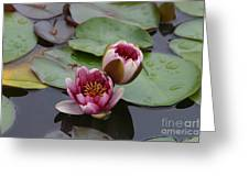 Water Lily With Bee Greeting Card
