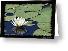 Water Lily With Black Border Greeting Card