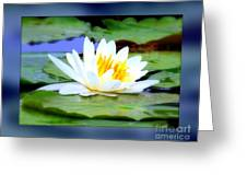Water Lily With Blue Border - Digital Painting Greeting Card