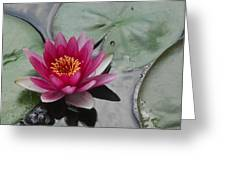 Water Lily With Bubbles Greeting Card