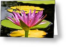 Water Lily With Dragonfly Greeting Card