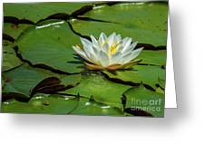 Water Lily With Friend Greeting Card