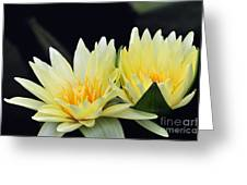Water Lily Yellow Nymphaea Greeting Card