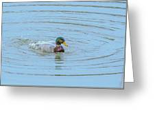 Water Off A Ducks Back Greeting Card