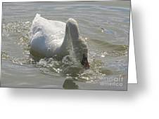 Water Off A Swan's Back Greeting Card