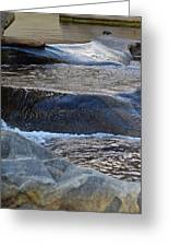 Water Ouzel, Middle Fork Kaweah River, Sequioa National Park Greeting Card