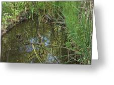 Water Pond Reflection In Peters Canyon Greeting Card