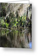 Water Reeds And Spanish Moss Greeting Card