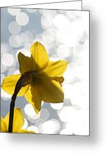 Water Reflected Daffodil Greeting Card