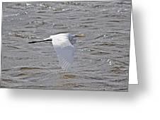 Water Skimming Greeting Card