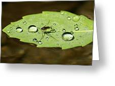 Water Strider Has A Drink At The Floating Leaf Cafe Greeting Card