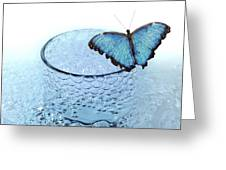 Water With Butterfly Greeting Card