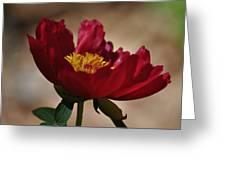 Watercolor Beauty Greeting Card