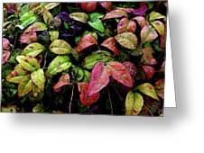 Watercolor Colorful Leaves After A Shower 1771 W_2 Greeting Card