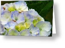 Watercolor Hydrangea Greeting Card