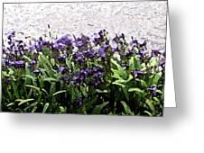 Watercolor Iris  Greeting Card