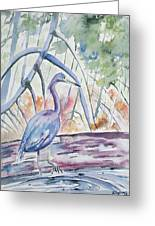 Watercolor - Little Blue Heron In Mangrove Forest Greeting Card
