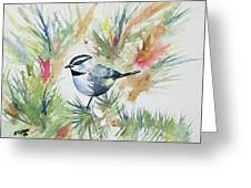 Watercolor - Mountain Chickadee And Pine Greeting Card