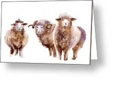 Watercolor Sheep Greeting Card