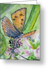 Watercolor - Small Butterfly On A Flower Greeting Card